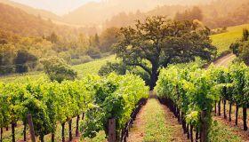 За «добрым» вином и весельем в Чешскую Республику!